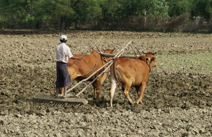 Ploughing the fields with flip-flops